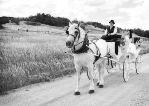 Lovely bride setting in a white carriage with red velvet seating interior, being pulled by a white horse. Black and White