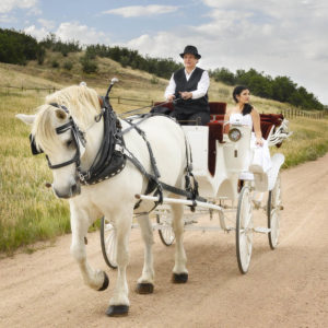Lovely bride riding in white carriage with red velvet seating interior, being pulled by a white horse.