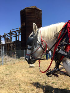 a portrait of a white horse with blinders on and red satchels.
