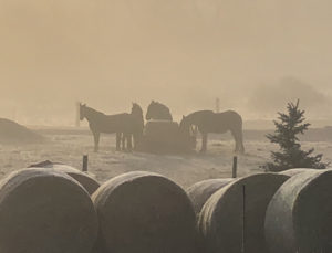 foggy and frosty morning, showing 4 horses eating hay. Multiple spiraled har bails populate the forground