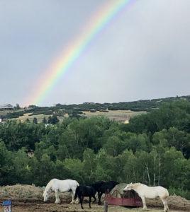 2 white and one black horses under a raindbow