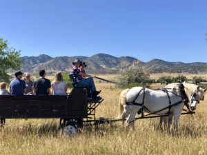 A wagon full of people being pulled by two white horses in colorado back country