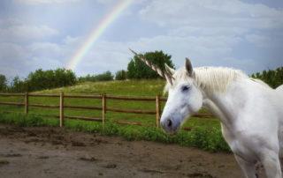 a white unicorn under a rainbow