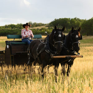 Carla stearing two brown horses pulling a carriage