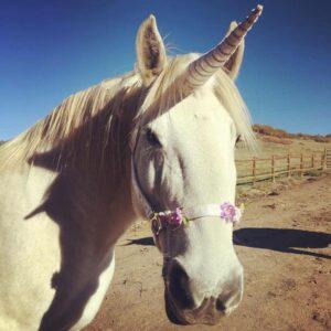 White unicorn horse
