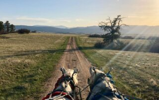 Firt person view of stearing two horses down a country road in Colorado with mountains on the periphery.