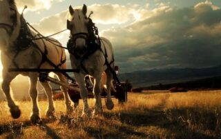 Very epic photo f two horses pulling a wagon with the sunset behind them.